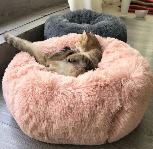 Lit pour chien , une couche confortable